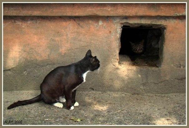 как поймать дикую кошку во дворе